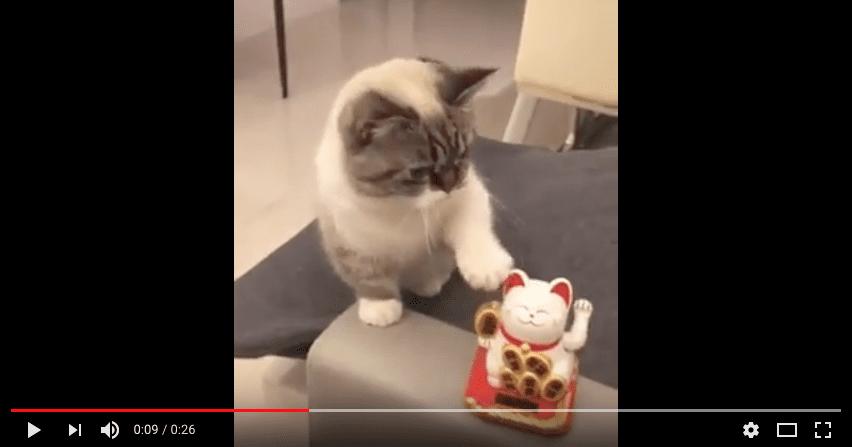 Majmold-majmold, különben sose leszel igazi profi kínai macska!